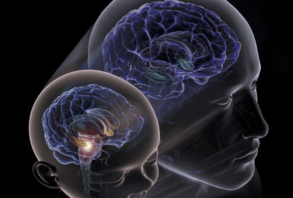 ترمیم سلول های عصبی پس از آسیب