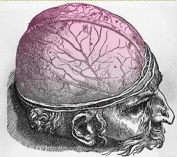 مغز ما هر لحظه دو نسخه از حافظه را تشکیل می دهد
