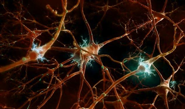 تحریک مدارهای عصبی در مراحل اولیه رشد