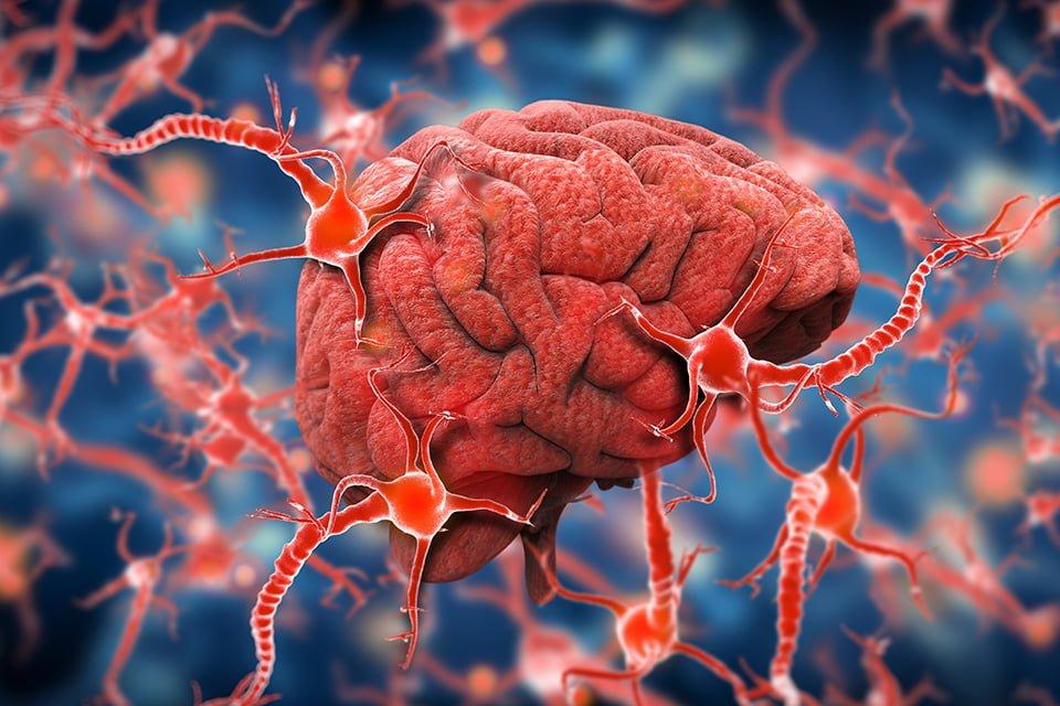 دیابت و عملکرد مغز