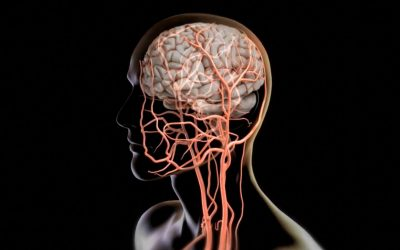 اختلال در عملکرد طحال و اضطراب چه ارتباطی دارند؟