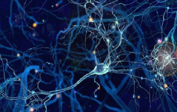 مغز چگونه حافظه را از اطلاعات جمع آوری شده توسط حواس ما تشکیل می دهد؟
